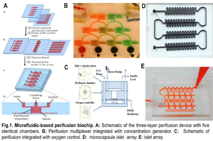 6 images depicting - A: Schematic of the three-layer perifusion devise with 5 identical chambers. B: Perifusion mulyiplexer integrated with concentration generator. C: Schematic of perifusion integrated with oxygen control. D: Microcapsule islet array. E: islet array.
